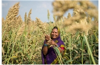 UK and India research and training network to improve nitrogen use in cereal crops